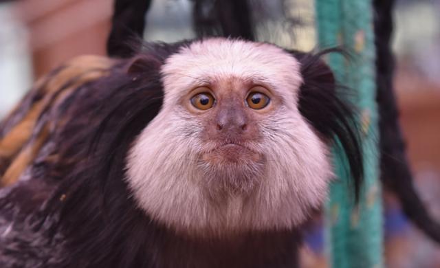 Primate-Enrichment 3