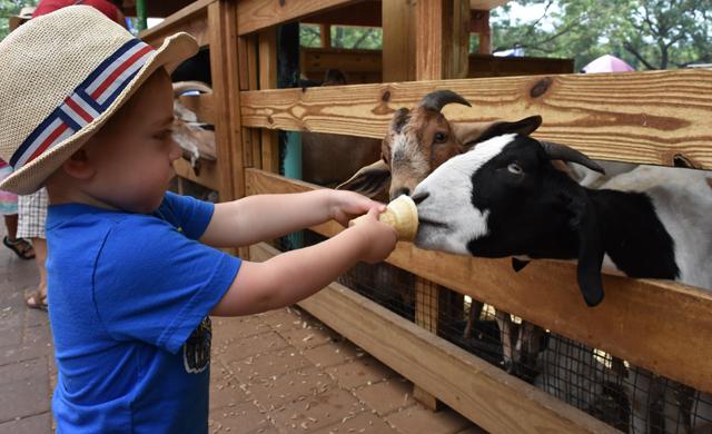 animal farm feeding