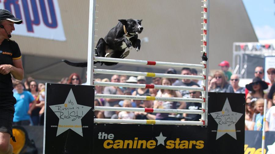 Canine Stars 2